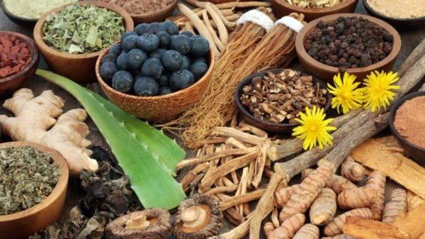 Thinpo - Adaptojenik Bitkiler: Stresle Baş Etmede Direncinizi Arttırın
