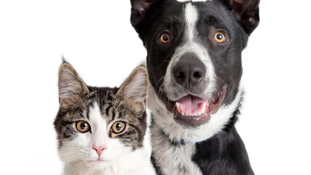 Thinpo - Kedi, Köpek Kovucu Organik Sprey Tarifi