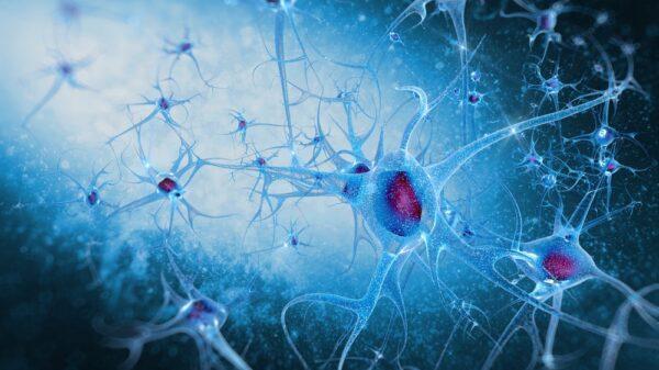 Thinpo - Spinal Müsküler Atrofi Hastalığı Ve Kayropraktik Tedavi Yöntemleri