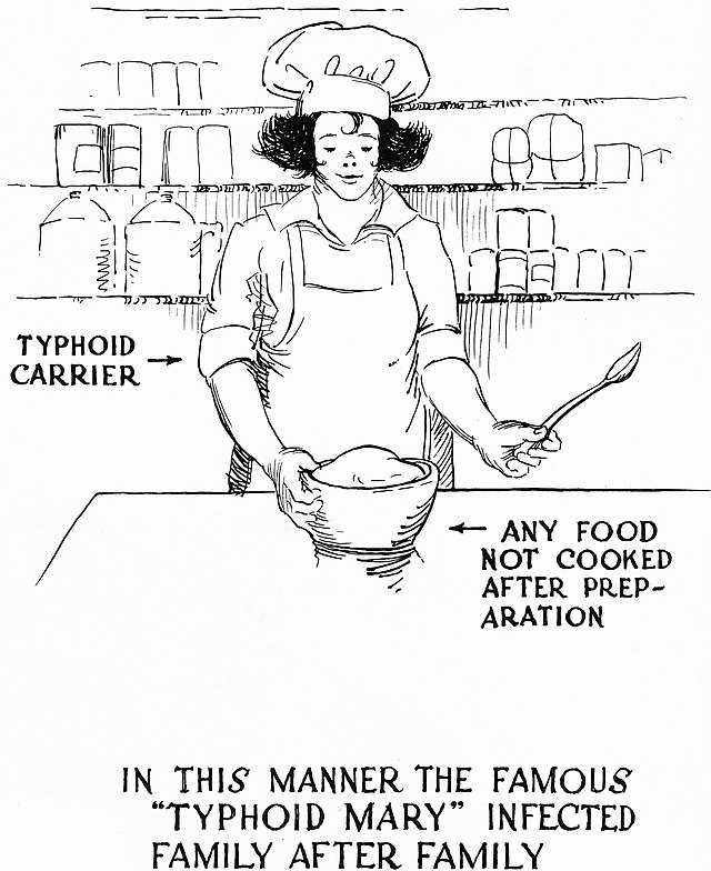 Thinpo - Tifo Ateşinin Doğuşu: Mary Mallon'un Trajik Hikayesi
